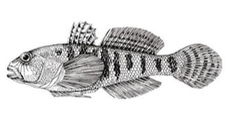 Knstlich Qualle Krake Goldfisch Verzierung Fisch Tank