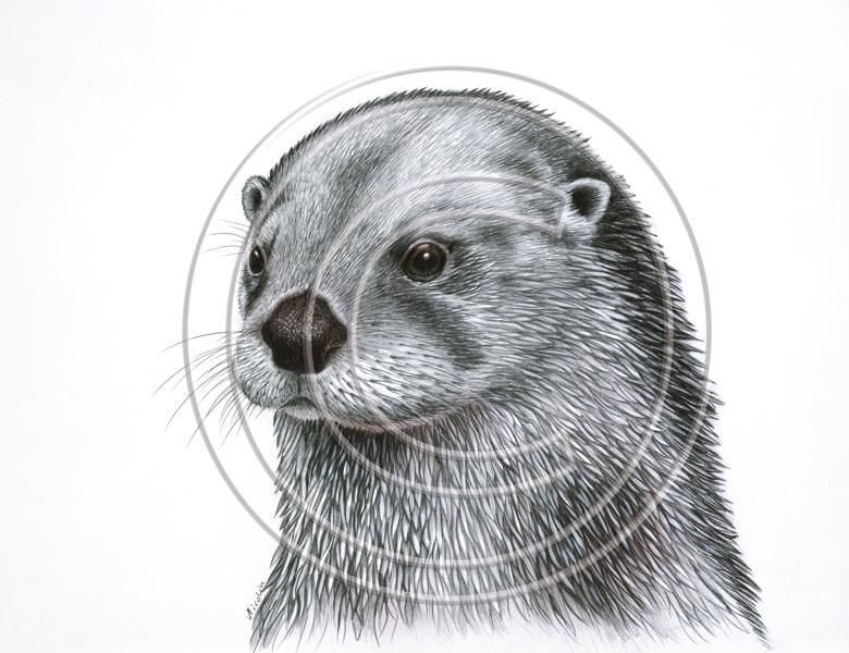 Otter   Art Decoration...